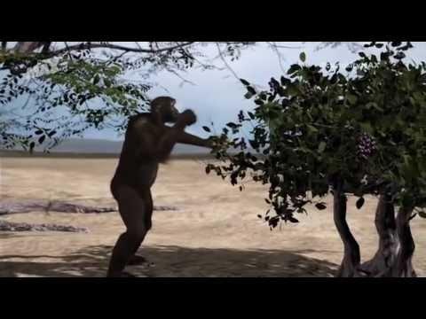 De neandertales a sapiens